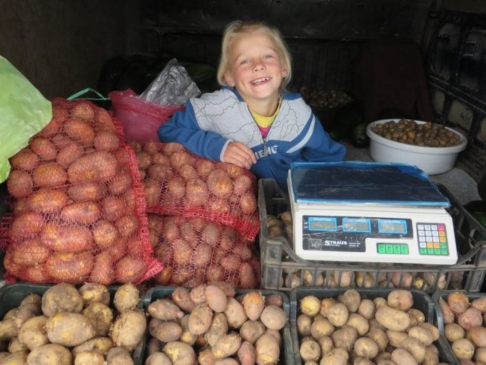 """Paklausta, ar padeda tėčiui auginti bulves, aštuonerių Smiltė Aleksiejūtė nusišypso ir išpyškina: """"Padedu: kai tėtis su mama dirba, aš dviračiu važinėju aplink lauką."""" A. Mackuvienės nuotr."""