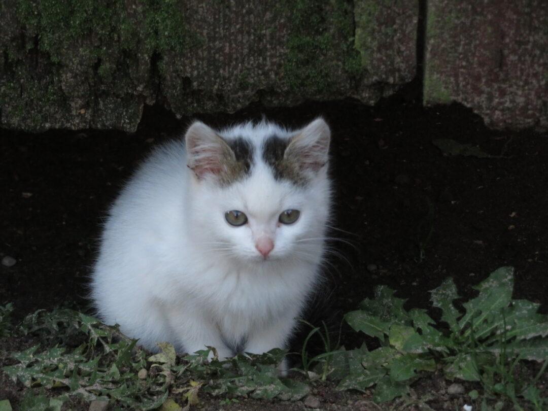 širdies sveikatai galvok katė širdies sveikatos vartotojų požiūrio į elgesį galimybės