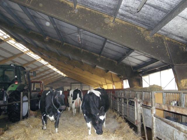 Modernių technologijų šaltasienėje fermoje laikoma banda mažiau serga. A.Minkevičienės nuotr.