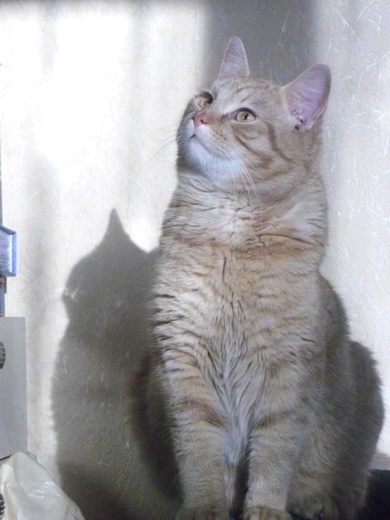 Katinas Ryžiukas.